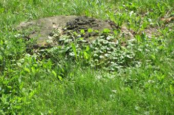 Reportáž: Strom před mojim barakem